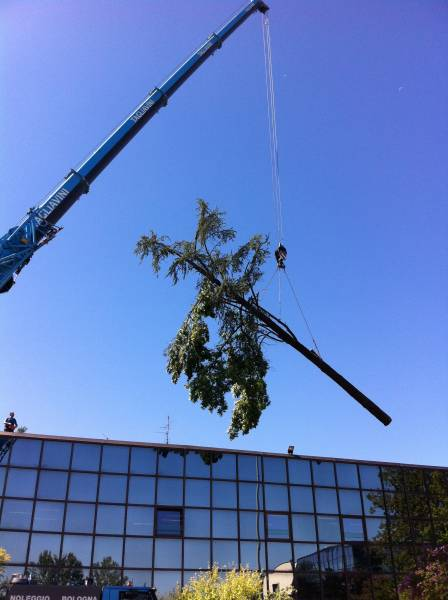 abbattimento cedro marazzi gru tronco 3