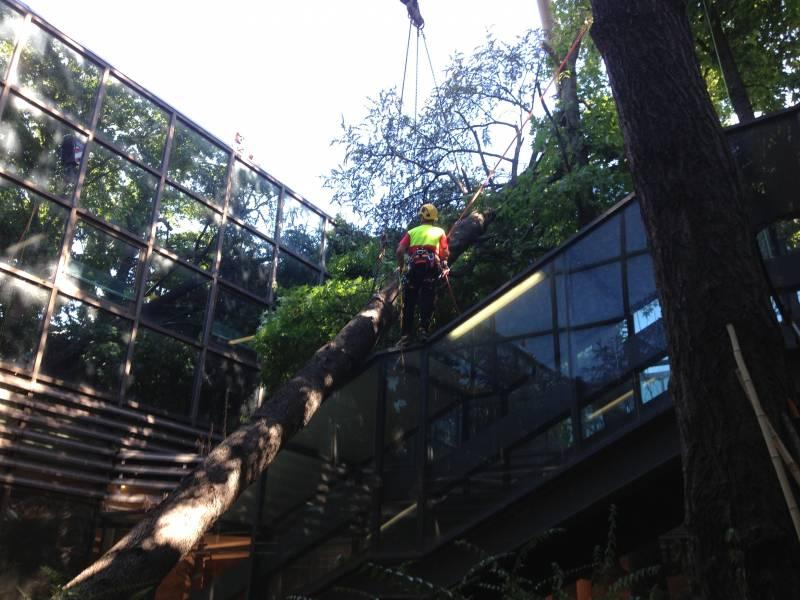 Abbattimento legatura tronco cedro marazzi
