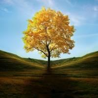 Arboricoltura Modena