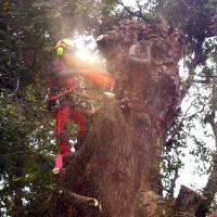 quercia fiorano 4