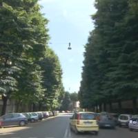 Tree Workers - alberi in città
