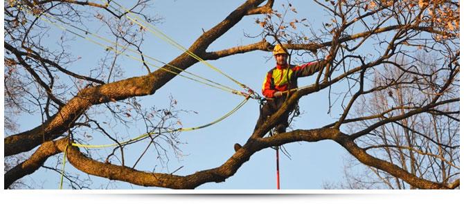Tree Doctor - il dottore degli alberi