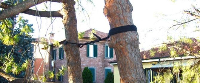 Consolidamento Alberi Modena