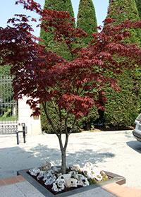Giardinaggio Modena