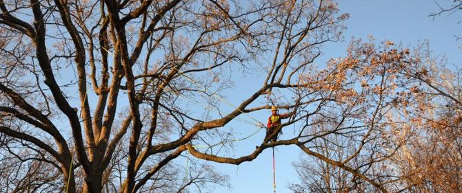Tree Climbing Modena