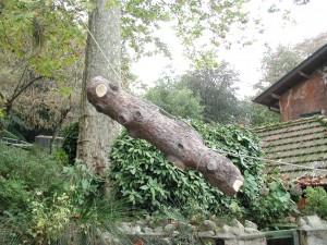 Treeclimbing Modena